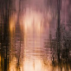 Weerschijnlijk (Mariette van Waard) Tags: nature trees motion blur long exposure