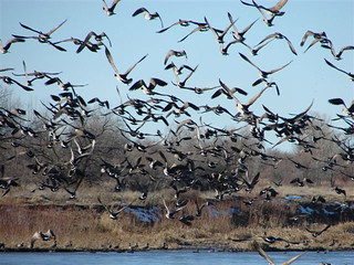 Nebraska Waterfowl Hunting 7