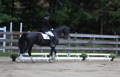 Doorn (Steenvoorde Leen - 1.6 ml views) Tags: horses horse jumping cross doorn pferde pferd reiten manege paard paarden springen 2015 utrechtseheuvelrug sgw dressuur arreche manegedentoom