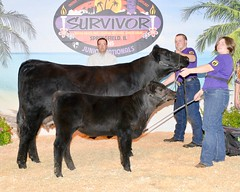 "Cow / Calf Champion 2015 • <a style=""font-size:0.8em;"" href=""http://www.flickr.com/photos/25423792@N05/21256299448/"" target=""_blank"">View on Flickr</a>"