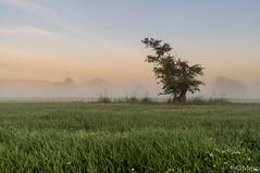 Un matin dans l'Illwald (Nu Mero) Tags: france nature alsace fr brouillard brume slestat illwald