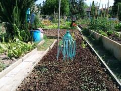 Orti Spallanzani (1) (Comune di Reggio Nell'Emilia) Tags: reggioemilia ambiente urbani orti spallanzani