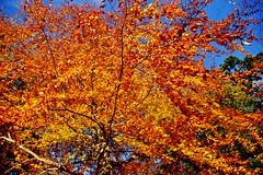 Autumn (osto) Tags: denmark europa europe sony zealand scandinavia danmark slt a77 sjlland osto alpha77 osto october2015