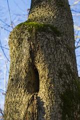 Ghosttree (Kaarel Kaldre) Tags: flickrfriday ghostsandgoblins ghost tree nature outdoor kummitus puu loodus nägemused visions