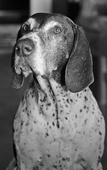 2015 05 08_d700_0008 (swedgatch (Missing my Father)) Tags: life light portrait blackandwhite bw dog art love beautiful beauty by photography prime photo spring nikon photographer dof angle artistic little photos sweet sweden stockholm perspective 85mm photographs photograph p nikkor f18 capture isa d700 swedgatch