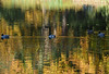Autumn reflections (yvonnepay615) Tags: uk autumn nature reflections lumix norfolk ducks panasonic eastanglia holkham coth gh4