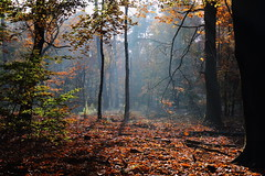 Beautiful october (RW-V) Tags: autumn trees light netherlands sunshine forest automne woods herbst herfst bos wald fort apeldoorn woud 3000views 100faves 200faves 150faves 80faves 300faves 120faves 250faves 350faves 175faves 275faves