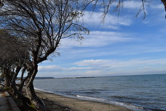 Blue.. (fil_____) Tags: blue autumn sea sky seascape tree nature landscape nikon outdoor ngc greece thessaloniki deepblue thermaikos macedonian makedonia  peraia       neoiepivates macedoniagreece   nikond3300  iamnikon mythessaloniki
