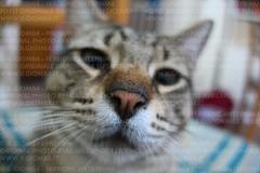 Sniff sniff (IlGiomba) Tags: cats fusa gattini animalidacompagnia