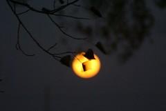 DSC00452 (carrie_20001jf) Tags: supermoon moon morning night astronomy texas sky texassky supermoon2016 2016 skyporn nature texasnature