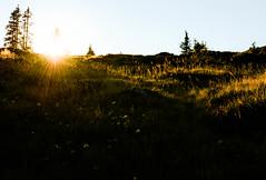 It's getting late. (balu51) Tags: wanderung abend sonnenuntergang sonne sonnenstrahlen lichtundschatten schwarz gelb alp herbst gegenlicht backlight sunset late evening lightandshadow golden black meadow grass hiking graubnden surselva september 2016 copyrightbybalu51