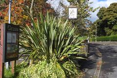 Holden Arms (Pub) Grane Road, Haslingden (mrrobertwade (wadey)) Tags: wadeyphotos mrrobertwade rossendale robertwade lancashire