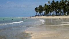 Praia dos Carneiros (Lucia Cysneiros) Tags: brasil pernambuco praiadoscarneiros beach plage mer