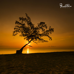 One Tree . (Ahmad Fahmi (markthedg)) Tags: adventure background beach beautiful camera dusk freedom happy healthy horizon inspiration landscape leisure lens lifestyle light men mirror moment morning nature outdoor person photo picture pro red reflection rock sea silhouette sky standing summer sun sunlight sunrise sunset sunshine taking time travel tripod water