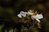 A billion Yahoo user accounts hacked (Steve-h) Tags: nature crime hacking yahoo verizon flowers seeds seedpods cistus rockrose dublin ireland europe winter december 2016 ef eos canon camera lens steveh