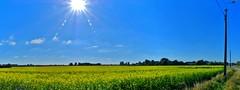 Zingem Herfst - Geel veld (4) (Johnny Cooman) Tags: zingem vlaanderen bel natuur bloemen bloesem landschap panorama belgium  landscape flemishregion flandre flandes flanders flandern blgica belgi belgique belgien belgia pano vlaamseardennen flhregion eastflanders flora aaa oostvlaanderen tree boom baum arbre herfst autumn panasonicdmcfz200 bos cloudscapes wolk wolken wolkformatie wolkformaties nuages