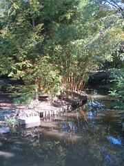 Creekside bamboo (Joel Abroad) Tags: sarahpdukegardens durham northcarolina creekside bamboo