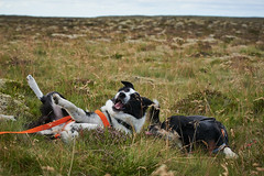 28august_Hringur&Venus_lastPlay_182 (Stefn H. Kristinsson) Tags: hringur venus august 2016 play leikur last reykjanes patterson iceland sland