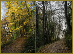 The Angus Effect (Shastajak) Tags: fairlightglen hastingscountrypark diptych beforeandafter autumncolours autumn stormangus