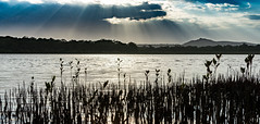 the harsh rays of the sun (andrew.walker28) Tags: sunlight harsh rays lake doonella tewantin queensland australia noosa