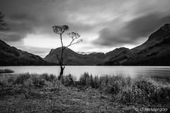 Buttermere Lone Tree (Splendid What) Tags: 2016 bw blackwhite buttermere buttermerecanvas buttermerephoto buttermerepines buttermereprint cumbria derwentwater fells fleetwithpike haystacks hikers hills lake lakedistrict lakedistrictcanvas lakedistrictphoto lonetree longexposure mono mountains november pines thesentinels tourism tourist trees walkers water winter
