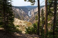 IMG_4240 Lower Falls (cmsheehyjr) Tags: cmsheehy colemansheehy nature scenery landscape yellowstone yellowstonenationalpark wyoming lowerfalls yellowstoneriver
