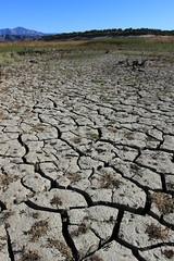6% (rarefruitfan) Tags: california lake cachuma dorough dry cracks climate change drought 2016
