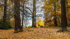 Jogger at Virginia Water (Clearway Photography) Tags: landscape virginiawater water lake surrey autumn trees