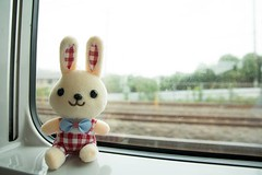 Train Window with Rabbit (mensore) Tags:  trainwindow rabbit   train