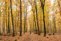 Sony A7r example shots (Ben Fredericson (xjrlokix)) Tags: sony a7r 28mm 28mmf2 f2 282 nature full hd large cc creative commons woods wald autumn fall germany wild wallpaper fullhd 4k iphone retina pig forest 2016 example frame wildpark granat nrw deutschland