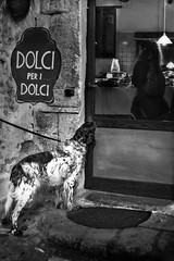 Dog wish (savolio70) Tags: dog cane sweet sweets dolci dolce negozio sweetshop negoziodidocli pasticceria savolio stefanoavolio biancoenero bw desiderio wish monocromo blackwhite blackandwhite
