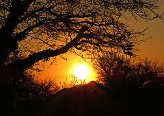 Oh What A Beautiful Morning! ('cosmicgirl1960' NEW CANON CAMERA) Tags: sunrise sun silhouettes devon dartmoor home orange black yabbadabbadoo