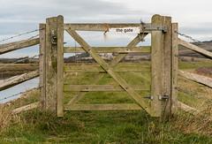 The Gate (Mandy Willard) Tags: 366 1110 2016th27