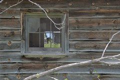 Looking back (Rocky Pix) Tags: lookingback broley spring house dairy barn window corral board siding detail abandoned farm agricultural stvrain river flood plane crane hollow road longmont boulder county colorado foothills rockypix rocky mountain pix wmichelkiteley f16125thsec45mm 2470mmf28g nikkor normalzoom monopod