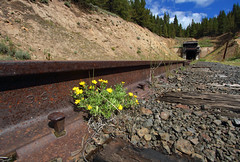Tennessee Pass2015 (Moffat Road) Tags: tennesseepass tunnel rail rust rustyrail flowers formerriogrande railbanked colorado track co spike