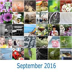 366: The 2016 Edition - September Mosaic (Fiona Dawkins) Tags: september mosaic 366the2016edition