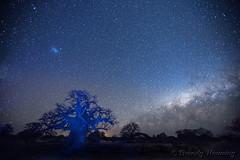40-Botswana_2016 (Beverly Houwing) Tags: africa botswana desert islandoflostbaobabs kalahari mgadikgadipans saltpan night astrophotograhy sky stars milkyway galaxy lightpainting longexposure blue