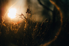 December sun (JuNu_photography) Tags: sun light december lens flare bokeh bokehlicious shallowdof dof nature finland winter dark 5d3 5dmarkiii ef135mmf2l 135mm f2 photooftheday exploring explorer explore backlit backlight silhouette mystery
