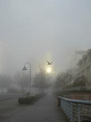 338/366 - Hint of Sun (entheos_fog) Tags: vancouver yaletown fog 365 366 365days porject365