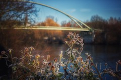 Frosty Day... (hobbit68) Tags: kalt cold main fluss river frankfurt