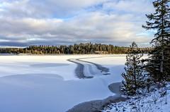 Whodunit? (AKA Jake Nowry) Tags: design lake ice winter beavers