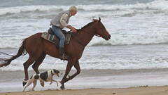 Beach Riding (blachswan) Tags: portfairy victoria australia southernocean beachriding horse gallop galloping sand beach water waves dog illowa illowabeach