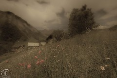Old Days (BeNowMeHere) Tags: ifttt 500px travel alps benowmehere chalet colours flowers france frenchalps landscape malcrozet mountains nature olddays poppy saintsorlindarves savoie sky clouds imagination poppies