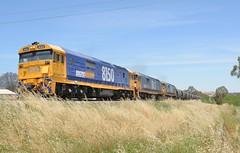 8150, 8143 & 8116 (rob3802) Tags: 81class 8150 8143 8116 pacificnational graintrain graincorp locomotive loco junee nsw diesel diesellocomotive dieselelectriclocomotive