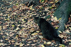 Today's Cat@2016-12-06 (masatsu) Tags: cat thebiggestgroupwithonlycats catspotting pentax mx1