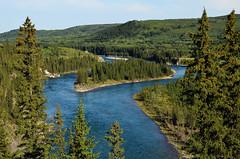 Bow River Island (Bracus Triticum) Tags: summer canada river island august alberta bow 8月 2015 カナダ hachigatsu 八月 hazuki 葉月 アルバータ州 leafmonth 平成27年