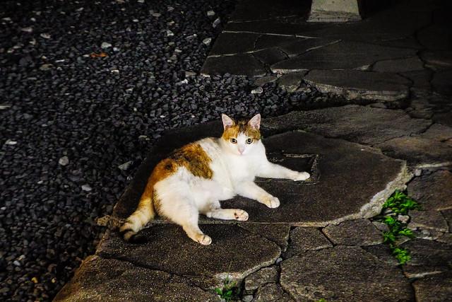 Today's Cat@2015-08-14