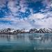 挪威北極熊_1d3_20150730-26.jpg