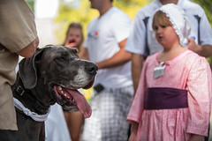 Dogs of DoG Street 2015 (efstop1) Tags: pets dogs animals colonial williamsburg canines dogsondogstreet