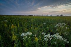 Last Rays of Summer #1 (jrobfoto.com) Tags: sunset flower raw sony wildflowers prairie fullframe alpha lightroom springbrook a7r springbrookprairie